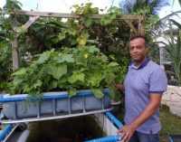 L'Aquaponie: LA solution de l'agriculture du 21éme siècle?