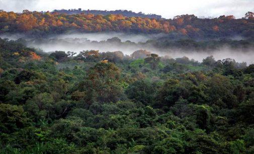 Post-Covid : les outils du droit contre la régression environnementale.#