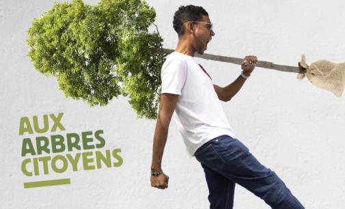 Quand la Martinique se mobilise pour planter un million d'arbres !