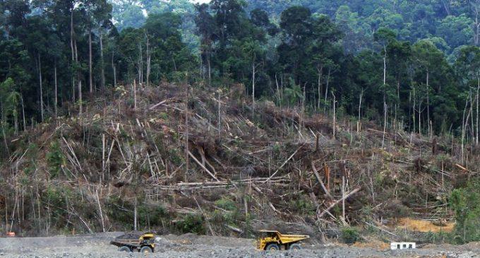 La Grande-Bretagne prévoit de légiférer contre la déforestation  importée