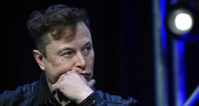 La puce connectée d'Elon Musk implantée dans le cerveau d'un cochon
