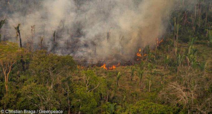 Incendies en Amazonie : Greenpeace fustige les importations françaises de soja
