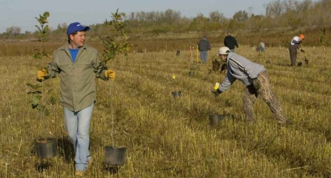 Planter des arbres pour le climat ? Oui, mais pas n'importe comment