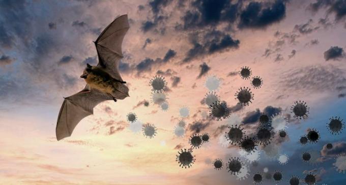 Le coronavirus est-il d'origine naturelle ou issu d'un laboratoire ? Décryptage avec le virologue Étienne Decroly