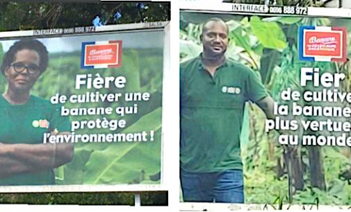 Quand les planteurs de bananes peuvent être fiers…