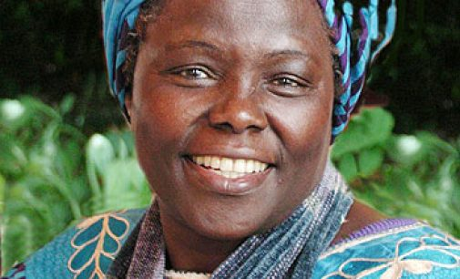 Qui est Wangari Maathai, figure du combat écologiste kenyan ?