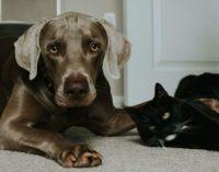 Faudrait-il instaurer un permis pour détenir un animal de compagnie?