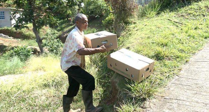 La Dominique réalise la première exportation de vétiver vers Antigua-et-Barbuda dans le cadre du projet IICA-CBF EbA