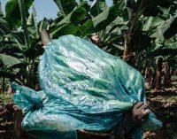 Lancement d'un suivi annuel de 75 pesticides dont le chlordécone et le glyphosate dans l'air ambiant